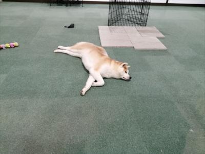 犬探し【秋田・秋田犬の里(Akita Dog Visitor Center)編󠄃】
