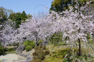 京都市内の桜・その2(平安神宮・十石舟めぐり)