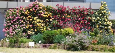 2021年5月 山口宇部空港にバラの花を見に行きました。飛行機の離発着も見ました。1回目