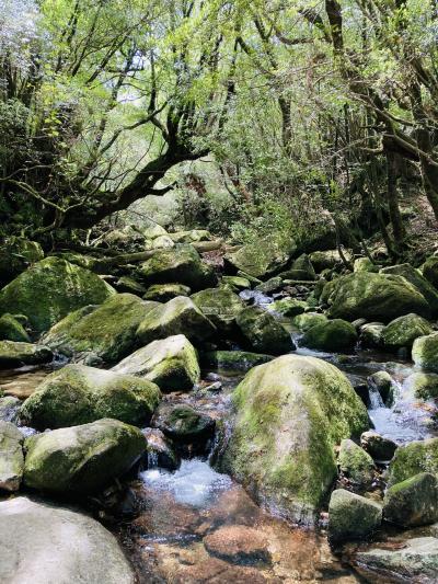 屋久島Sankaraリゾート&DQW もののけ姫の苔むす森と太鼓岩、シシ神に遭遇!?