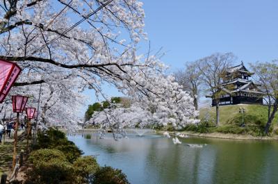 新潟県へのドライブ・その1(高田城址公園のサクラ・他)