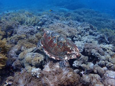 バリ島の自然に癒されたい 4日目