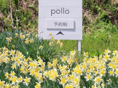 森の仲間になった気分がして.....、pöllö (ポロ)  / 柏崎市(新潟県)2021/4/24