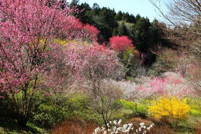 ◆春爛漫の万華鏡~山森沢・桃源の里