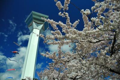 花だより 桜、咲き誇る函館五稜郭 水芭蕉、群咲く大沼公園