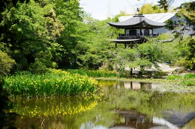 20210506-1 京都 勧修寺の杜若もそろそろやろかと