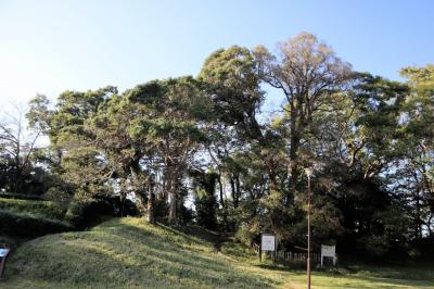 佐倉市散策(54)・・佐倉城址公園に樹木を訪ねて(前編)。