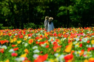 まるで映画のワンシーン(#^^#)  花いっぱいのパラダイス『くじゅう花公園』