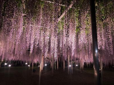 藤の棚の下 花の香りしたたる夜 猖獗を忘れ 紫に包まれる