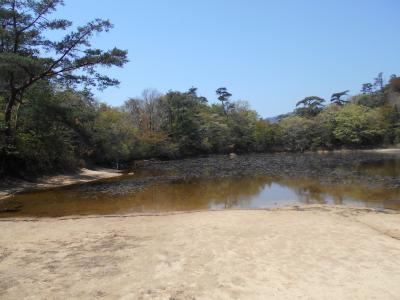 六甲山。横池にオタマに会いに行く。