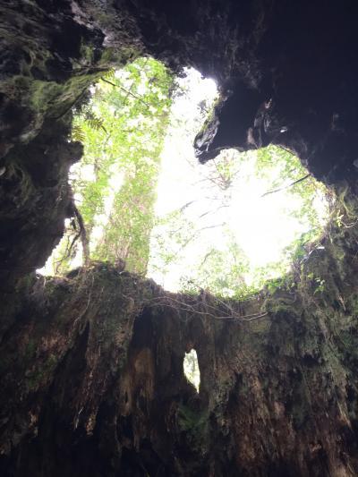 202104 縄文杉に会いに屋久島へ#2 縄文杉
