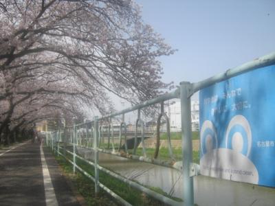 2021春・青春18きっぷ+αの旅(パート5:名古屋にて、慣れ親しんだ令和最初の桜を楽しむ日々)