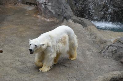 有名な旭山動物園に行ってきました.