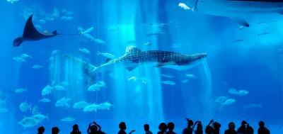 オリオンモトブでまったり沖縄本部の休日2日目以降~美ら海水族館とステーキ88、ハナサキマルシェなど