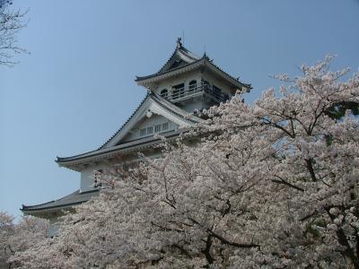 彦根城の桜、長浜城と豊公園の桜