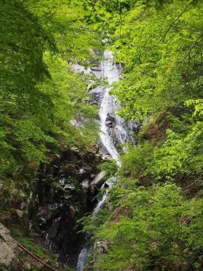 滝メグラーが行く229 氷ノ山山麓滝めぐり 兵庫県養父市