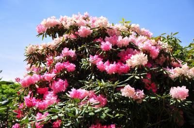 花ざかりの森を楽しむ!赤城自然園