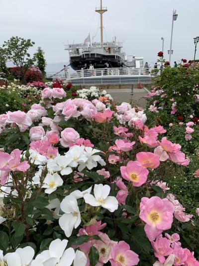 横浜 薔薇を見るお散歩 2021・5