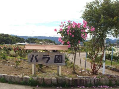 橿バラ園  !  橿原運動公園
