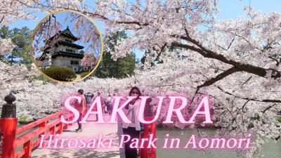東北紀行  後編  青森  日本三大桜の弘前城公園と武家屋敷
