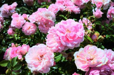 6月 キューガーデンの花に癒される旅