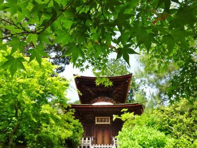 京のお散歩  3  常寂光寺~二尊院~福田美術館
