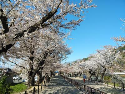 信州2021桜 【4】臥竜公園