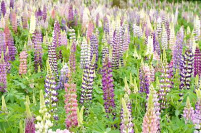 Japan 国営武蔵丘陵森林公園 2021春 ~ミツバチばあやの冒険~