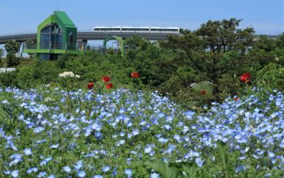 知立八橋の無量寿寺のカキツバタ園♪&モリコロパークで、花とリニモ撮ってきました♪