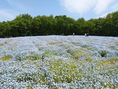 武蔵丘陵森林公園2021陽春1
