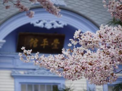 札幌('21 花見)