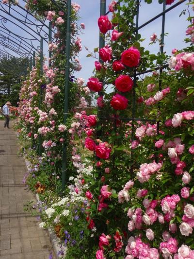 初夏の空気と花々に囲まれた結婚記念日旅行ーーー。