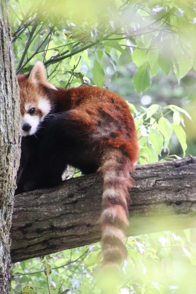 GW明けにもう一度埼玉こども動物自然公園(北園)初夏の緑の中でみやびちゃんとリンちゃん&ちょっと大きくなった動物赤ちゃんやアニマルステージ