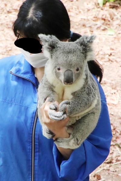 GW明けにもう一度埼玉こども動物自然公園(東園)コアラのピリーくんの抱っこ出勤やっと見られた!~カンガルーもワラビーも赤ちゃんちらり