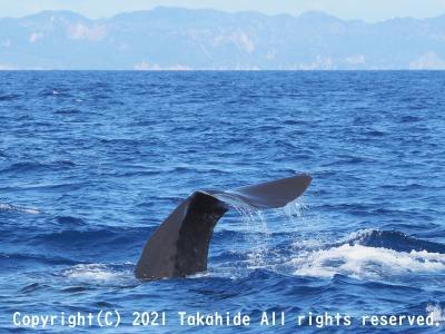 イルカ・クジラ・南島ツアー