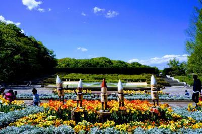 ルピナスに、ネモフィラとポピーの花畑♪やたら広くて、駅から遠いぞー 「武蔵丘陵森林公園」