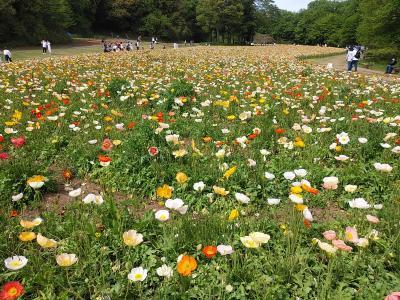 武蔵丘陵森林公園2021陽春2