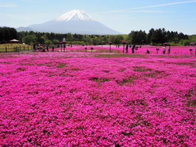 2021富士五湖の芝桜