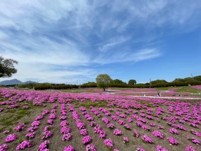 みさと芝桜公園とささやかな日常的あれこれ。