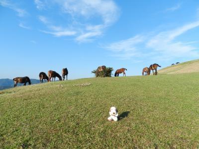 都井岬へドライブ!野生の馬に出逢う◆2016年11月・大隅半島&薩摩半島の旅《その2》