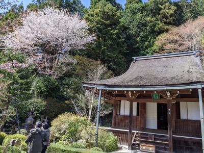古くからの友人と京都巡りの旅「寂光院」