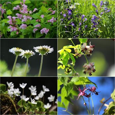 ◆福島・四季・彩々/ Part95~春の野の花巡り③