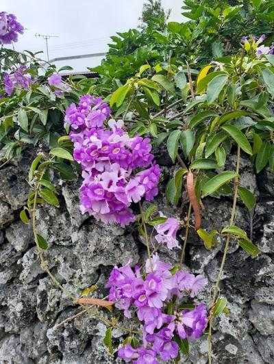 石垣再訪(25)竹富島に咲く南国の花。