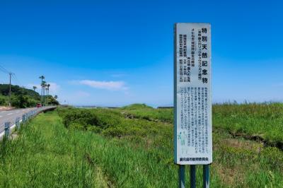 【2021国内】鹿児島へ帰省 ~マングローブの北限地、喜入へ~