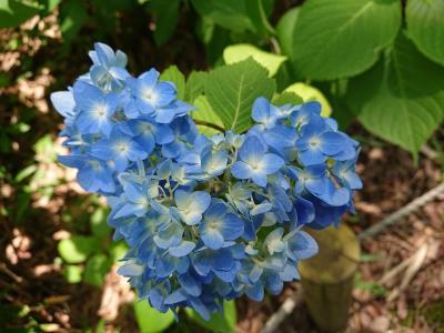 奈良の初夏の花鑑賞と中華とワイナリー