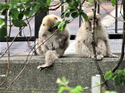 2021年5月29日、福島県甲子トンネルで野生の猿の親子を見ました。