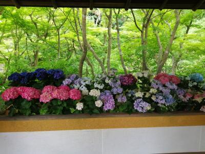 初夏の鎌倉散策(まんだら堂~旧華頂宮邸~一条恵観山荘)