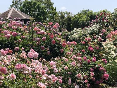 薔薇の名所、花菜ガーデン