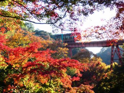 京都 八幡 石清水八幡宮参道ケーブル(Iwashimizu Hachimangu  Cable, Yawata, Kyoto, JP)
