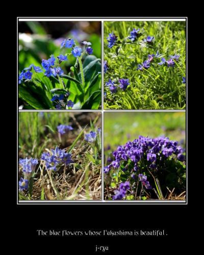 ◆福島・四季・彩々/ Part96~春の野の花巡り④